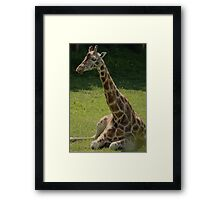 Join Me For A Spot Of Sunbathing? Framed Print