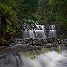 Liffey Falls by Peter Daalder