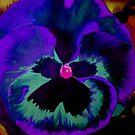 Purple Pansy by WienArtist