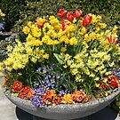 """""""Huge Flower Pot"""" by Lynn Bawden"""