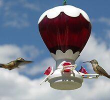 Hummingbirds at Feeder by JoutrasD