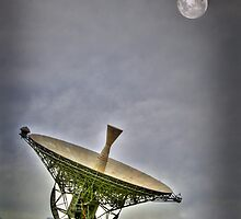 Not THE dish by Mark Moskvitch