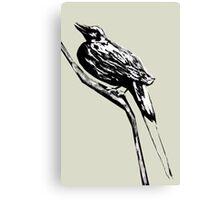 Long tailed blue bird 4 Canvas Print
