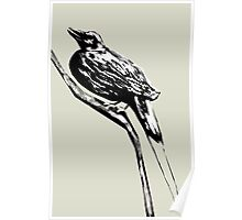 Long tailed blue bird 4 Poster