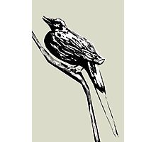 Long tailed blue bird 4 Photographic Print