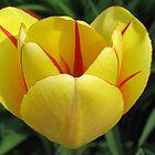 Floral Sunshine by Monnie Ryan