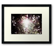 New light through an old tree Framed Print