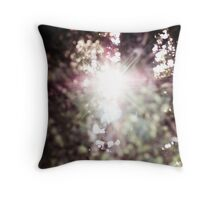 new light through an old tree auf Redbubble von pASob-dESIGN