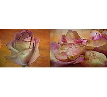 death of a rose Photographic Print