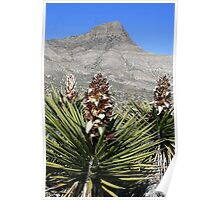 Red Rock Desert Flowers#2 Poster