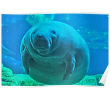 Awesome Manatee Poster
