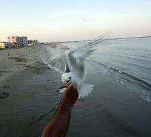 SeaGull & Fries by AuntyReni