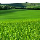 Fields of Green by mikebov
