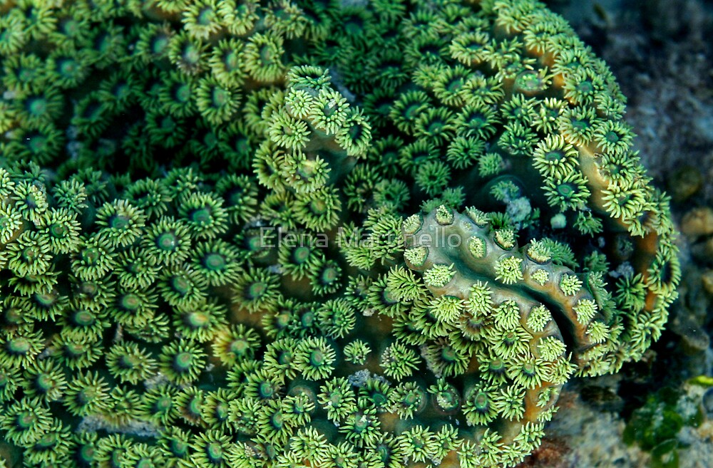 Coral on the reef by Elena Martinello