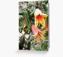 correa reflexa Greeting Card