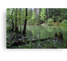 Silence of the forest lake Canvas Print