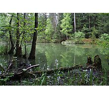 Silence of the forest lake Photographic Print