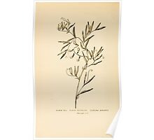 Harper's Guide to Wild Flowers 1912 Creevey, Caroline and Stickney, Alathea 109 Marsh Pea or Marsh Vetchling Poster
