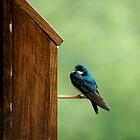 wet bluebird by Roslyn Lunetta