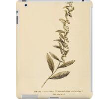 Harper's Guide to Wild Flowers 1912 Creevey, Caroline and Stickney, Alathea 139 Dwarf Cassandra iPad Case/Skin