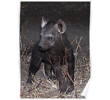 Hyaena Cub in Den - Kruger National Park Poster