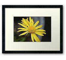 Sunshine Yellow Framed Print