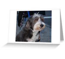 Manhattan, Beardie Pup Greeting Card