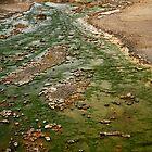 Green Flow by Olga Zvereva