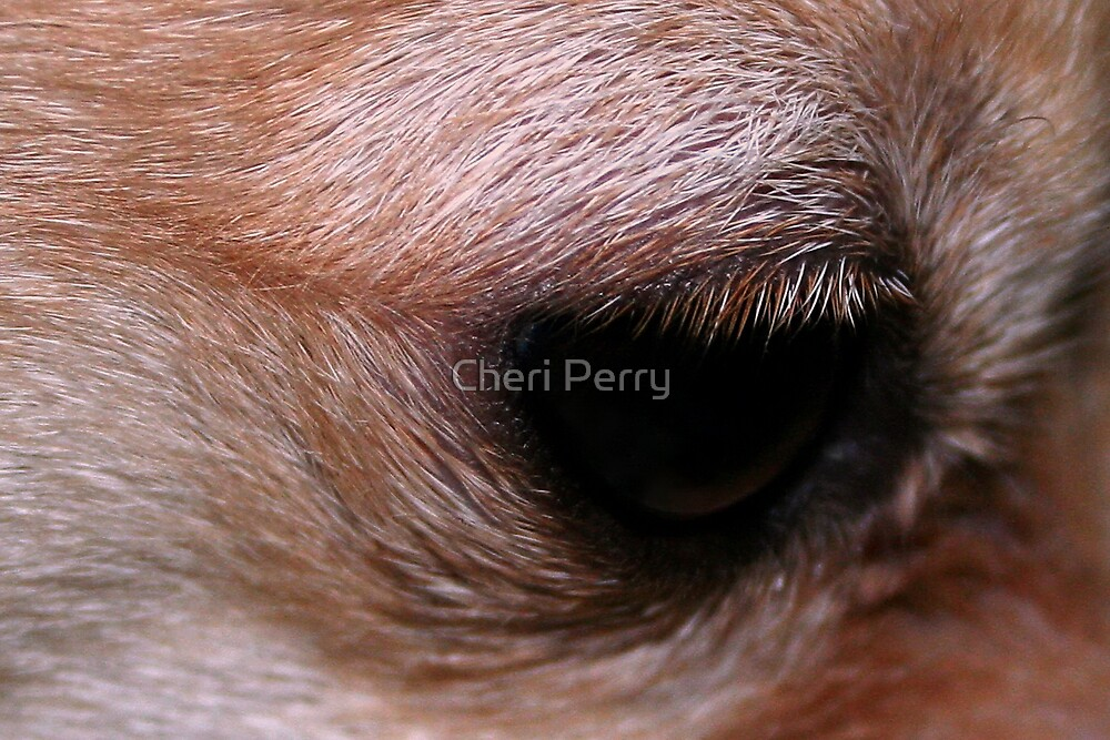 """""""EYE"""" am watching you by Cheri Perry"""