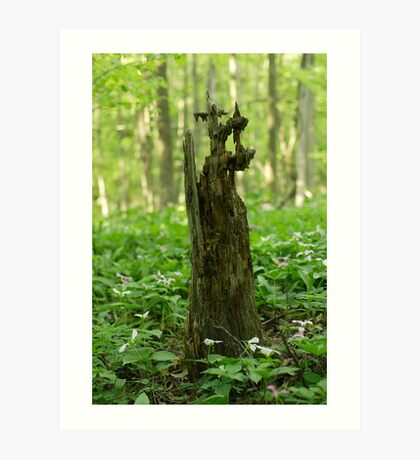 Forest decay Art Print