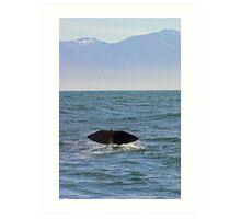 sperm whale, tail down, Kaikoura Peninsula , New Zealand   Art Print