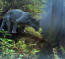 Panther  by billfox256