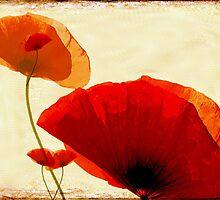 i love poppy by Anne Seltmann