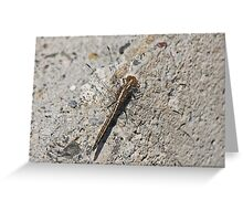 Small Chaser Greeting Card