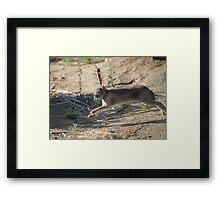 Jack the Rabbit Framed Print