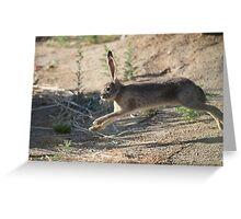 Jack the Rabbit Greeting Card
