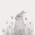 little Rabbit by samclaire