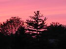 Trees in Pink by Veronica Schultz