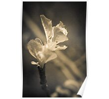 Trace of Spring Poster