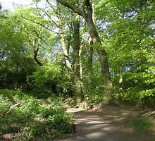 Trees and Light in Upton Wood by Songwriter