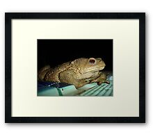 Toad by Poolside Framed Print