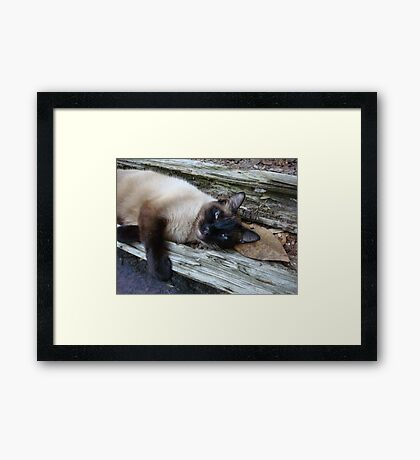 SUSHI IN THE CATS' CRADLE Framed Print