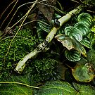 Green Leaves by mrfriendly