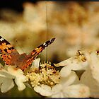Painted Lady by FelicityB
