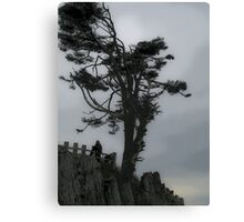 windswept 2 Canvas Print