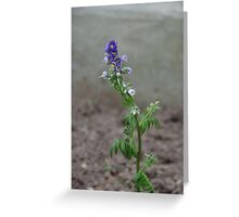 Unidentified Blue Flower Greeting Card