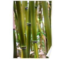 Bamboo Gardens Poster