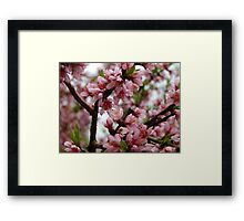 Ode to Spring - Please view larger Framed Print