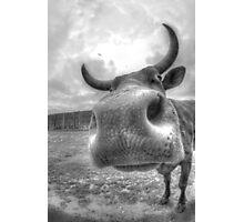 Cow  Photographic Print