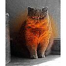 Purr-fect Light by Terri Chandler